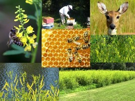 SHIP From US, 25K Seeds Yellow Blossom Sweet Clover, DIY Decorative Plan... - $38.85