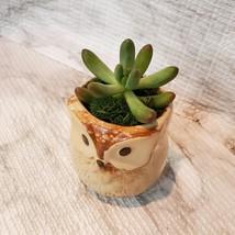Owl Planter with Succulent, Many Fingers Sedum Pachyphyllum, Bird Animal Planter image 4