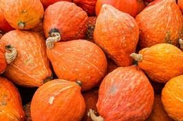 Squash Winter Golden Hubbard Non GMO Heirloom Vegetable Seeds Sow No GMO® USA - $3.65+