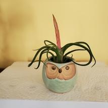 "Owl Planter with Air Plant, 2.5"", sea green ceramic pot, Tillandsia airplant image 2"