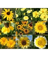 1 oz Bulk Wildflower Yellow Mix Fresh Seeds Both Sun Tolerant #SMA1 - $37.99