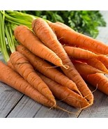 Tendersweet Carrot Seeds - 500 Count Seed Pack - Non-GMO - Rich-Orange C... - $13.49