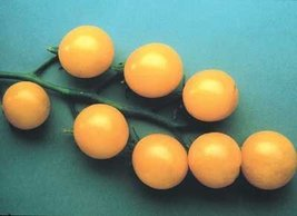 2000 Seeds of Sweet Gold FT Hybrid - Tomatoes Yellow - $178.10