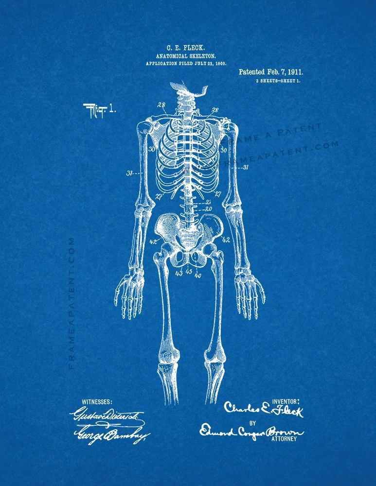 Primary image for Anatomical Skeleton Patent Print - Blueprint