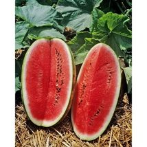 15 Fresh Seeds Sangria Watermelon #IMA30 - $20.99