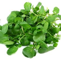 SHIP From US, 1/4 oz 31K Seeds True Watercress, DIY Herb Seeds ZJ01 - $52.41