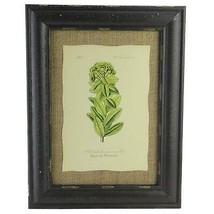 "Raz 16.5"" Botanic Beauty Euphorbia Pannonica Print Burlap Framed Wall Art - $28.30"