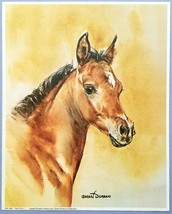 The Filly                   1980's Art Print                   Susan Dor... - $9.75