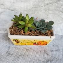 Fall Succulent Dish Garden in vintage harvest loaf pan, Ceramic pumpkin planter image 3