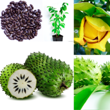 Soursop Seeds 15 / Guanabana / Annona muricata, Seeds for Planting,Organ... - $5.49