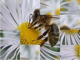 Puzzle de la abeja - $7.99