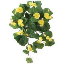 Begonia Hanging Stem by OakRidge-Yellow - $17.74
