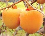 51dl83sgpvl. sl1500  thumb155 crop