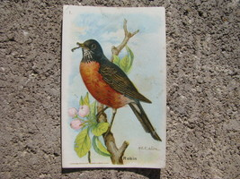 vtg Litho 1918 Arm Hammer Useful Birds of America 5th series Card number... - $19.78