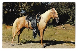 Prize Palomino Saddled Horse Vintage Baxtone Postcard - $4.99