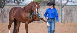 Clinton Anderson Mega Pack Horse Training Bundle 8 courses DownUnderHors... - $156.82