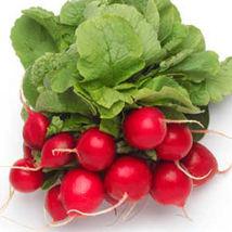 Ship From Us Cherry Belle Radish Seeds ~ 50 Lb Seeds - NON-GMO, Heirloom, TM11 - $479.96
