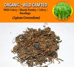 Wild Celery Marsh Parsley Celery Smallage Apium Graveolens Organic Wild ... - $12.40+