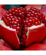 BEST PRICE Pomegranate seeds, Delicious fruit for HOME DIY GARDEN, 20 pcs/Pack - $2.99