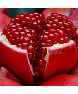 borsa gigante semi di melograno casa pianta delizioso frutto semi per giardino semina thumbtall