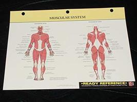 Human Muscular System Ready Reference [Hardcover] [Jan 01, 1996] Life Ar... - $19.99