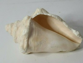 "White Cream Designer Decor Conch Shell Size 7"" Sea Shell Nautical Beach ... - $24.99"