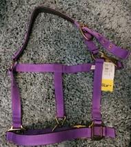 Action Company Yearling Nylon Padded Halter Purple image 1