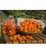 25 Habanero Pepper 2019 (All Non-Gmo Heirloom Vegetable Seeds!) - $5.92