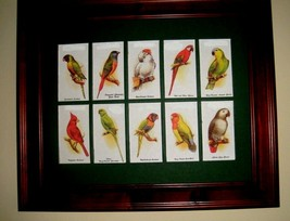 PARROTS, FINCHES, CANARIES and CHICKENS -  IN A MAT (Buy FRAMED or UNFRA... - $24.74