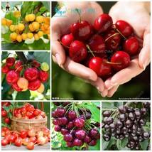 10pcs Red Cherry Bonsai Balcony Garden (3), HZ Delicious Fruit Seeds - $8.89
