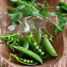 Outdoor Living – Gardening – Vegetable Seeds - 50 Little Marvel Pea - WFW - $23.95