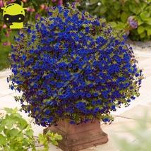 Super 100 Psc Sky Blue Calibrachoa Petunia Flower Seed Rare Variety Flow... - £1.73 GBP