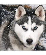 Diamond Painting Wolf Animal Rhinestone Embroidery Cross Stitch ,Home De... - $8.40