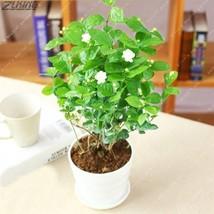 20 PCS Chinese Beautiful Pure White Jasmine Seed Bonsai Rare Perennial A... - $2.16