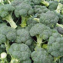 500 Seeds Broccoli De Cicco Seeds, NON-GMO, Heirloom - $8.99