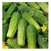 David's Garden Seeds Cucumber Pickling Boston SS3009 Green 50 Non-GMO, H... - $7.50