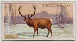 Wapiti Elk 1924 Trade Ad Card - $3.29