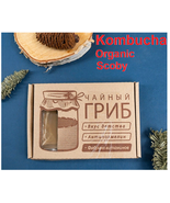 Kombucha Organic Scoby, 100ml Strong Starter Tea, Instructions, Free Pos... - $19.90