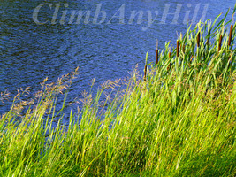 Photography, Digital Download, Nature - $5.00