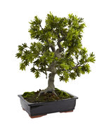 Giant Podocarpus w/Mossed Bonsai Planter, Nearly Natural - $263.60