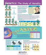 """Genetics: The Study of Heredity Poster - Laminated, Full-Color, 23"""" x 35"""" - $19.98"""