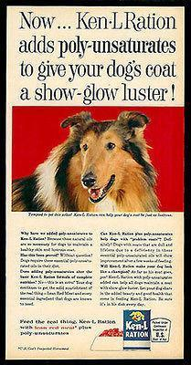 Primary image for COLLIE Dog AD for Ken-L Ration Dog Food AD 1963