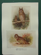 VINTAGE BIRD PRINT ~ LONG-EARED OWL ~ SHORT-EARED - $38.33