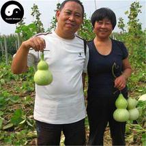 Buy Calabash Gourd Seeds Plant Melo Lagenaria Siceraria Bottle Gourd - $5.99