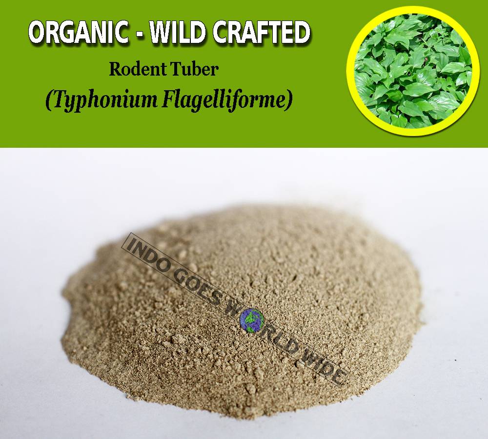 POWDER Rodent Tuber Typhonium Flagelliforme Organic Wild Crafted Fresh Herbs