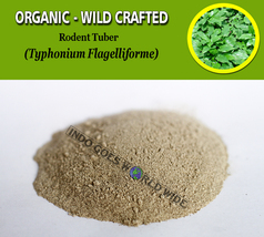 POWDER Rodent Tuber Typhonium Flagelliforme Organic Wild Crafted Fresh H... - $7.85+