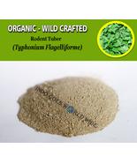 POWDER Rodent Tuber Typhonium Flagelliforme Organic Wild Crafted Fresh H... - $16.40+