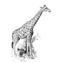 "ROYAL BRUSH Sketching Made Easy Giraffe Mini Kit, 5"" by 7"" - $2.99"