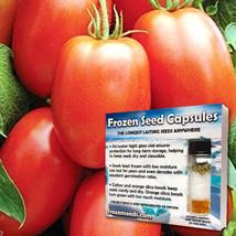 Amish Paste Tomato Seeds (Lycopersicon esculentum) 10 Rare Heirloom Seed... - $24.95