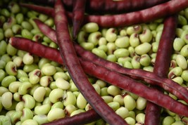 Mississippi Purple Crowder Southern Pea Seeds - Cowpea Garden Seed (Pack... - $0.99